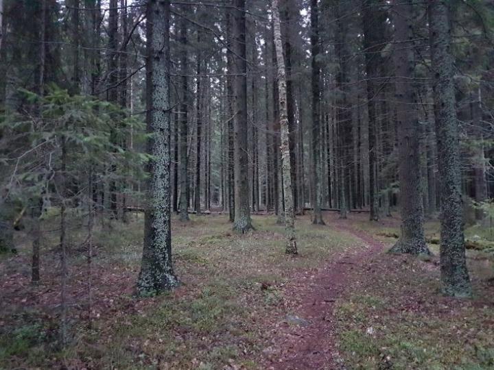 Tältä näytti Joensuun Kuhasalossa 12.1.2020. Lumesta ei ole paikoitellen tietoakaan.