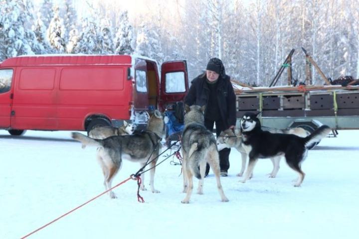 Lieksalainen valjakkoveteraani Pia Isomursu lähti viime viikonloppuna koirineen pohjustamaan ja merkitsemään kilpailureittiä.