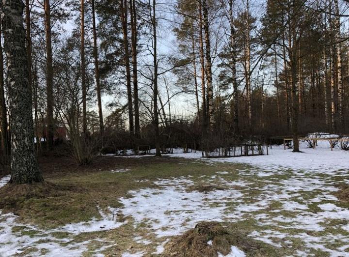Pihanurmikkoon ilmaantui pälviä Reijolassa 9. tammikuuta.
