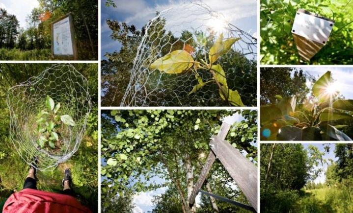 Puulajipuistosta löytyy Linnunlahdella monenlaista nähtävää, kun vain osaa katsoa.
