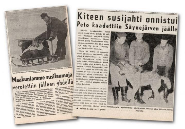 Susiuutisointia Karjalaisessa. Lehtileikkeet ovat vuosilta 1962 ja 1959.