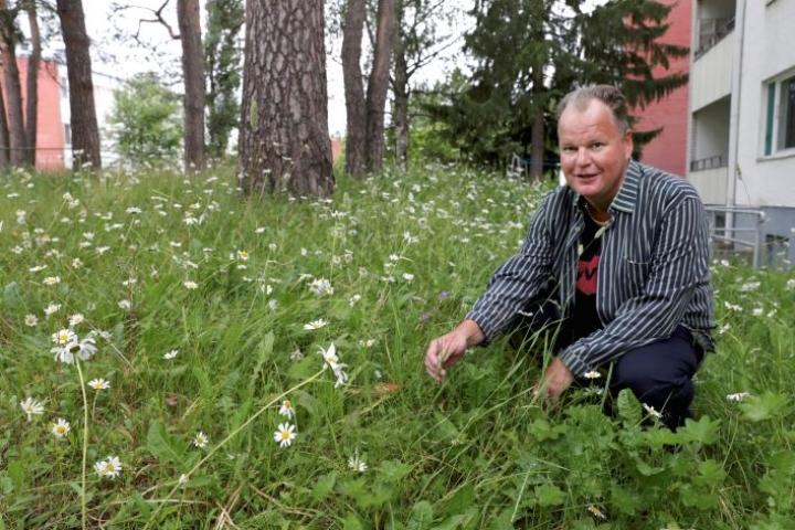 Mika Peuhkurinen vaalii kukkaniittyä Joensuun keskustan kerrostalon pihalla.