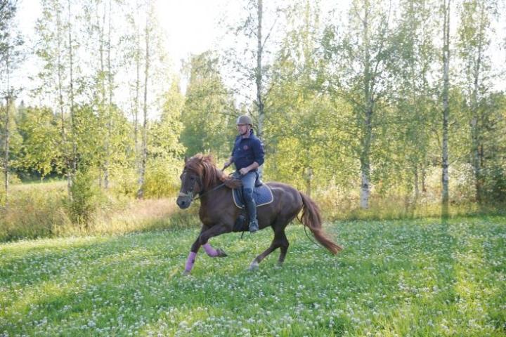 Laukka vei mennessään. Hevoset ovat muuttaneet Jouko Tervon elämää.