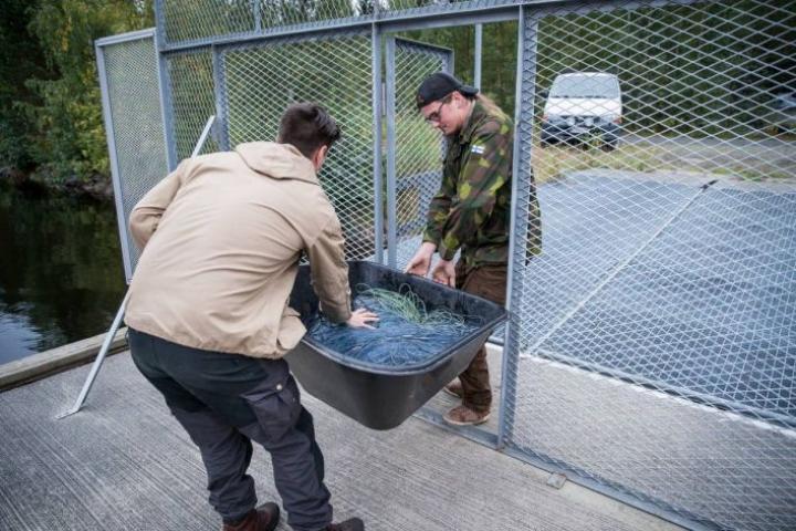 Ei tätä ole ainakaan kalastajille tehty, sanovat Antero Suokas ja Samu Hurskainen (selin) Reijolan venelaiturin portista.