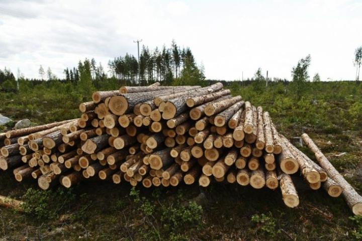 Hovioikeus hylkäsi toukokuussa Metsähallituksen kanteen Stora Ensoa, Metsäliitto Osuuskuntaa sekä UPM-Kymmeneä vastaan puukartellijutussa. LEHTIKUVA / Roni Rekomaa