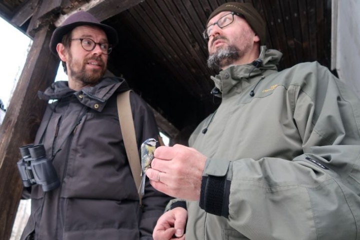 Juha Kauppinen (vas.), sinitiainen ja Markku Huttunen kohtaavat Höytiäisen lintuasemalla.