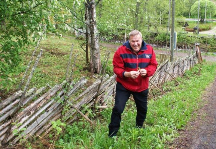 Mauri Åhlbergin mukaan syötäviä kasveja on helppo löytää.