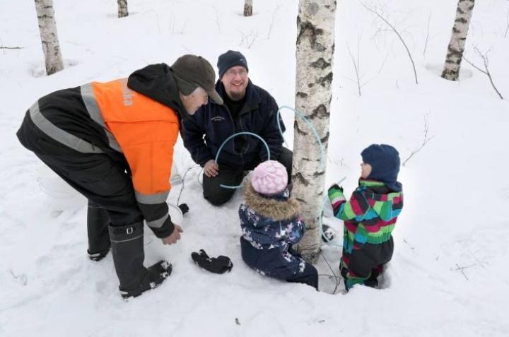 Isoisä-Lauri ja isä-Matti Lihavainen sekä lapset Aamu Ilona ja Leo asensivat yhteistuumin mahlanvalutusletkua ensimmäiseen koealakoivuun.