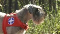Koirat tiiviimmin mukaan pelastustehtäviin
