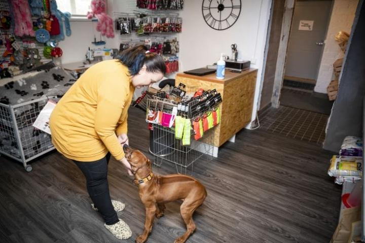 Neljä kuukautta vanhan Armi-koiran emäntä Mirka Tossavainen sanoo, ettei ole luovuttajatyyppiä. – Yrityksen ensimmäinen vuosi ei ole ollut helppo, mutta menen sisulla eteenpäin.