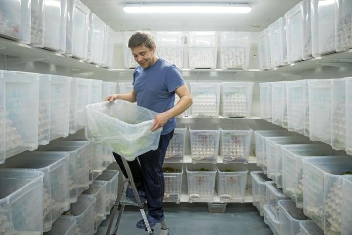 Hermanni Niemisen sirkkakasvattamossa oli parhaillaan 70 laatikkoa. Nyt toiminta pyörii säästöliekillä.