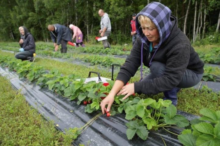 Ukrainalainen Olesia Nesterenko työskentelee Mansikkapaikka Timosella sekä Kiteen että Niittylahden toimipisteissä.
