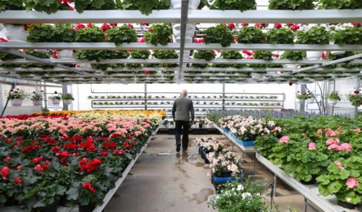 Pohjoiskarjalaiset yritykset ovat selviytyneet toistaiseksi korona-ajasta kuivin jaloin. Esimerkiksi puutarhamyymälöissä kauppa on käynyt poikkeusolojen aikana hyvin. Kuva Monosen puutarhalta Reijolasta.