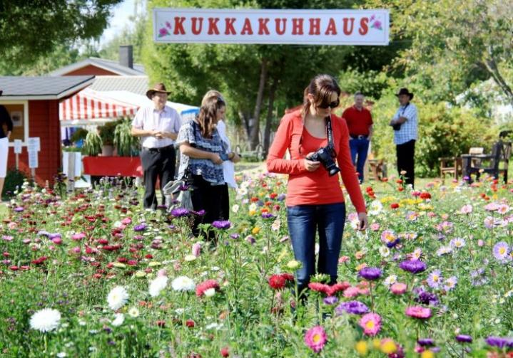Kuva Kukkakuhhauksesta vuodelta 2014.