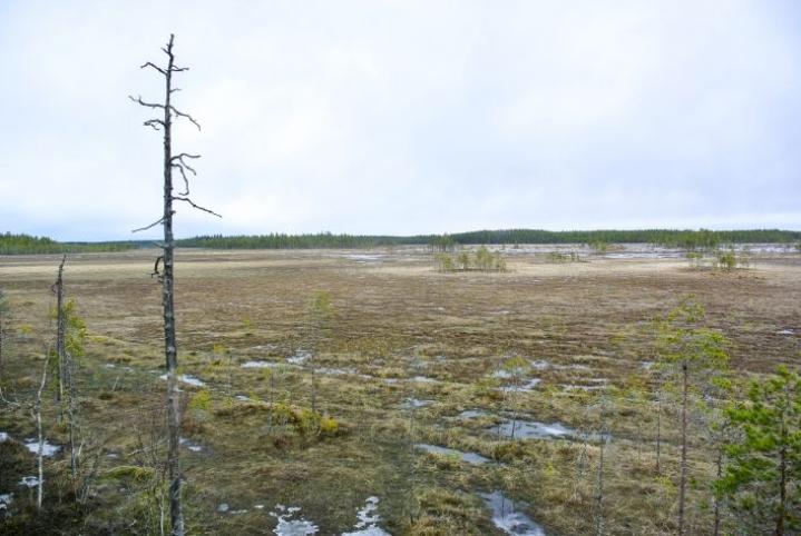 Suoerämaan luonto tunnetaan karuudestaan.