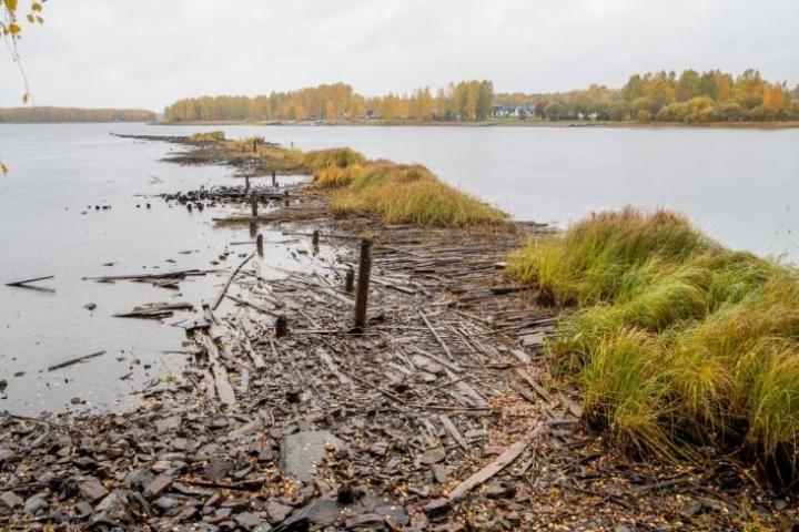 Matalat vedet toivat esiin Pielisjoen pohjassa olevat Utran sahatoiminnan aikaiset jätepuut. Kuva on otettu Utrasta lokakuun alussa.