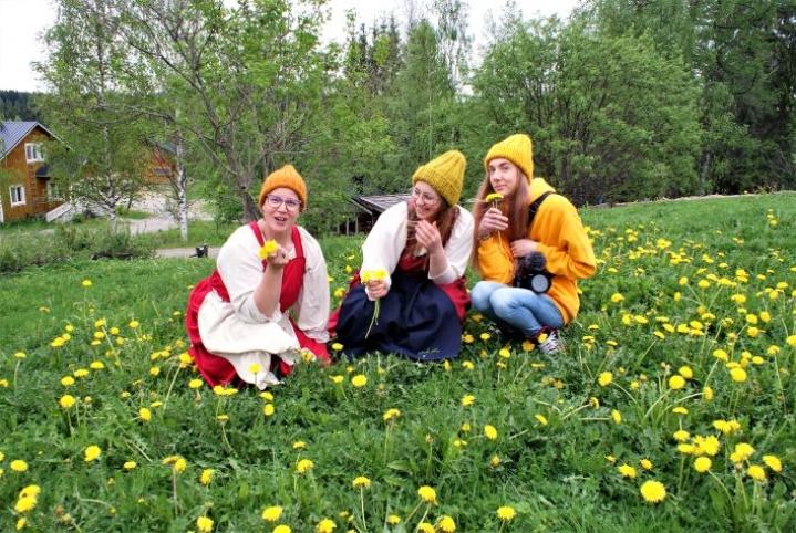 Korona-aika yhdisti Anni Korhosen, Taru Korhosen ja Matti Koukkarin tekemään verkkokursseja karjalaisesta perinteestä, kuten ruuasta. Siihen kuuluu villiyrttien keräys, ja nyt pellot ovat täynnä voikukkia eli keltaista herkkua, kuten Anni Korhonen kuvailee.
