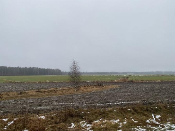 Reijolan peltoaukeat olivat lumettomat 21. joulukuuta.
