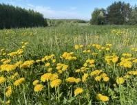 Blogi: Toukokuu itäosissa maata keskimääräistä lämpimämpi - Ennätyshelteiden jälkeen on palattu normaaliin alkukesän säähän