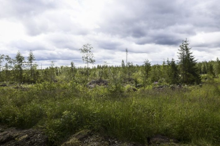 Tukea myönnetään yksityisille maanomistajille joutoalueiden eli viljelyn ulkopuolelle jääneiden peltolohkojen sekä turvetuotannosta vapautuneiden suonpohjien metsittämiseen. LEHTIKUVA / Emmi Korhonen