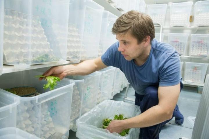Niittykummun tilan 300 000 sirkkaa syö päivässä kolme kiloa salaattia. Maatalousyrittäjä Hermanni Nieminen rakensi sirkkalan kierrätysmateriaaleja hyödyntäen.