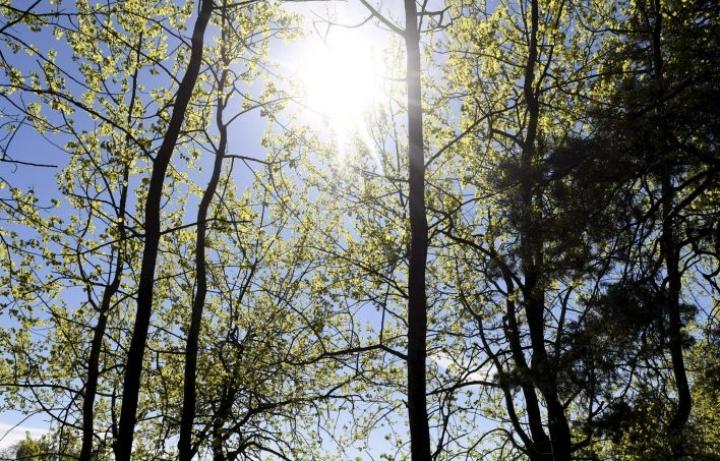 Tiistaista alkaen suuren osan maata valtaa kesäinen lämpö, ja aurinkoa on luvassa sitä enemmän, mitä pidemmälle viikko etenee. LEHTIKUVA / Vesa Moilanen