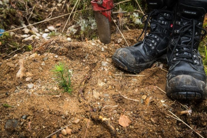 Metsänomistaja uudistaa metsänsä ja hoitaa sitä hyvin.